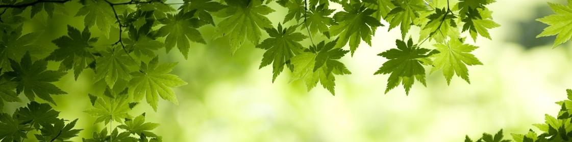 cropped-green_maple_leaves_wide-1280x800